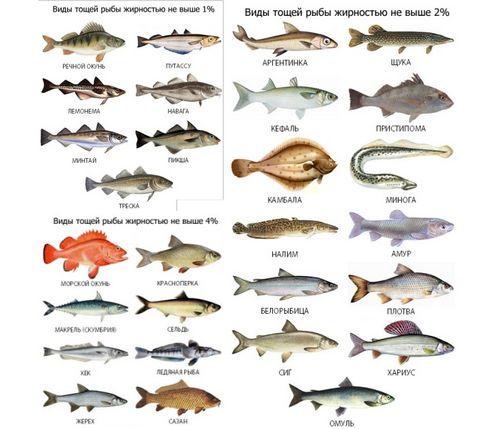 Какую рыбу можно есть при подагре названия, сорта, как правильно приготовить