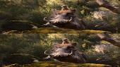 Король Лев 3D / The Lion King 3D  (by Amstaff)  Вертикальная анаморфная стереопара