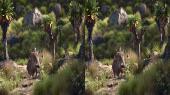 Король Лев 3D / The Lion King 3D  Горизонтальная анаморфная стереопара