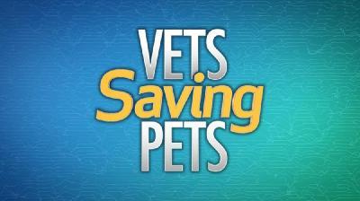 Vets Saving Pets S02E13 Long in the Tooth HDTV x264-CRiMSON[rarbg]