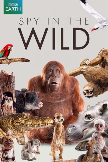 Spy In The Wild S02E03 HDTV x264-dotTV