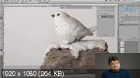 Adobe Photoshop: маски вырезания. Практика применения (2020) Мастер-класс