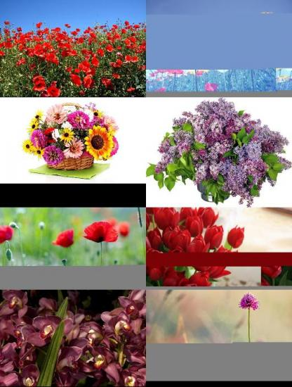 Beautiful Flowers Wallpapers {Pack - 140}