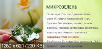 Микрозелень у вас дома - зеленые проростки для жизни и хорошего иммунитета (2020) Видеокурс