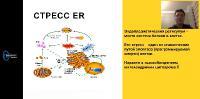 Нейротропные факторы (2020/PCRec/Rus)